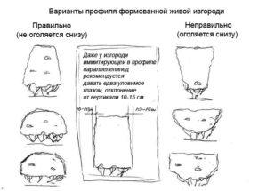 Схема стрижки кустарников