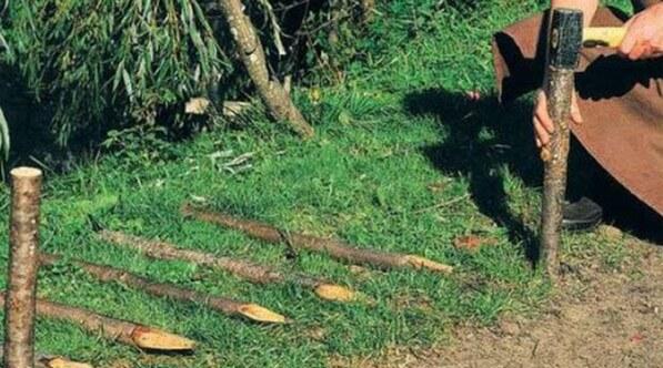 Заготовка кольев для плетенного заборчика